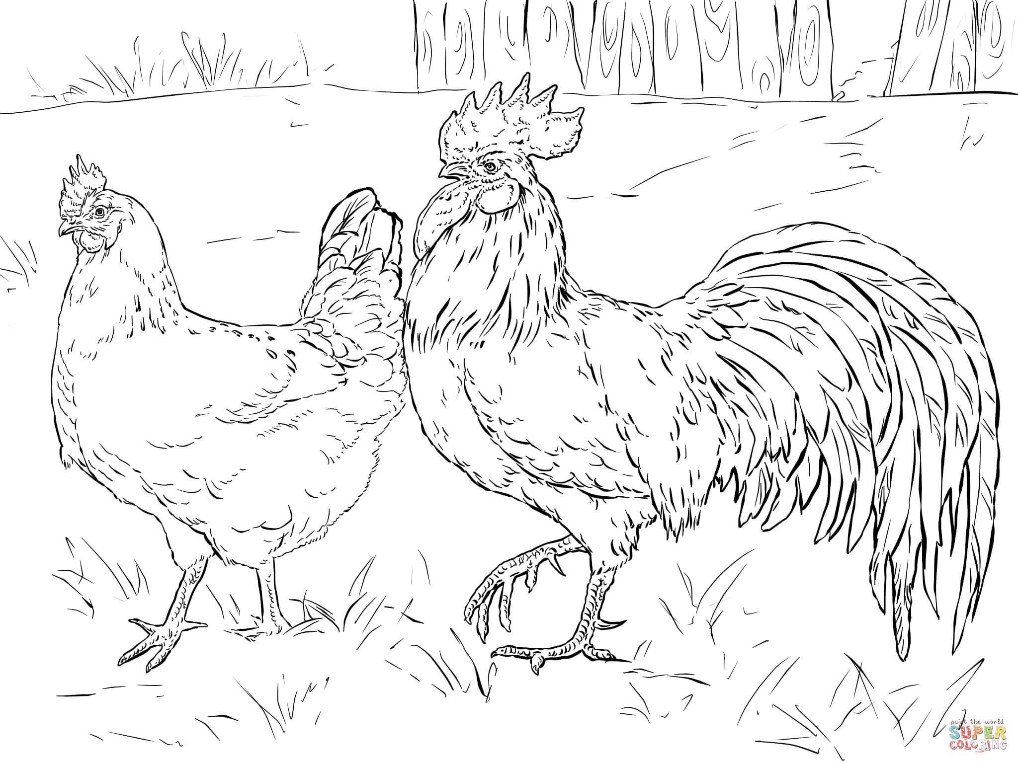 Henne und Hahn