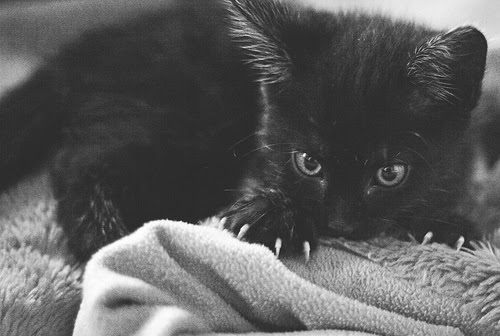 b&w, black and white, black cat, cat, cute, kitten, kitty