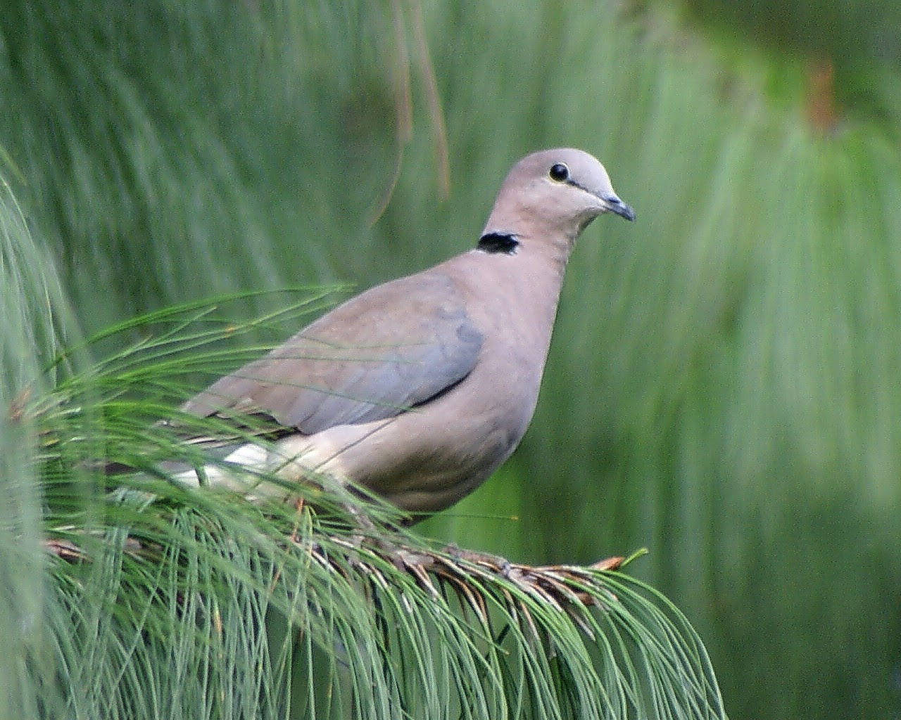 Dove - Doves Photo (32938282) - Fanpop