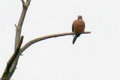 bird 038