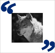 Quotes Uncovered If Wolves And Sheep Could Vote Freakonomics
