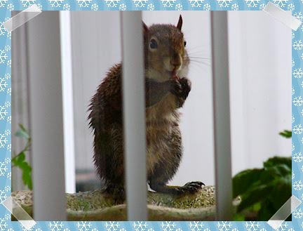Squirrel? Hedgehog?