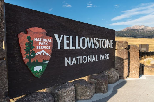 Yellowstone National Park kills aggressive grizzly bear