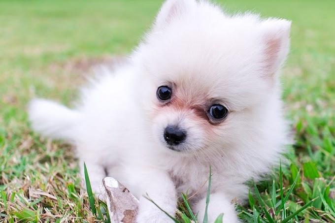 ¿Qué significan los ojos llorosos en perros?