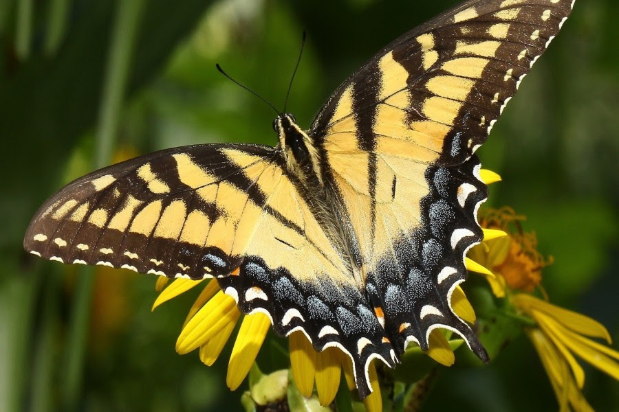 Fondos De Mariposas Imágenes Mariposas