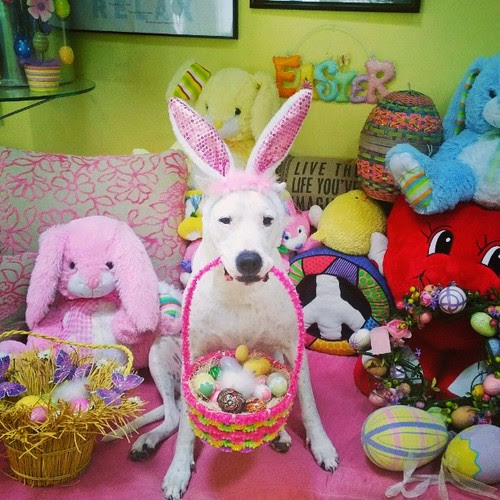HAPPY EASTER FROM YOUR FAVORITE DOG - ALASKA !
