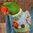 Bird Cage Covers- Why? – Paco Parrot's Blog