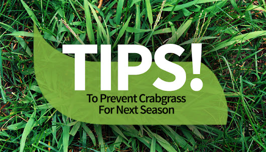 Tips To Prevent Crabgrass For Next Season - T&B Landscaping