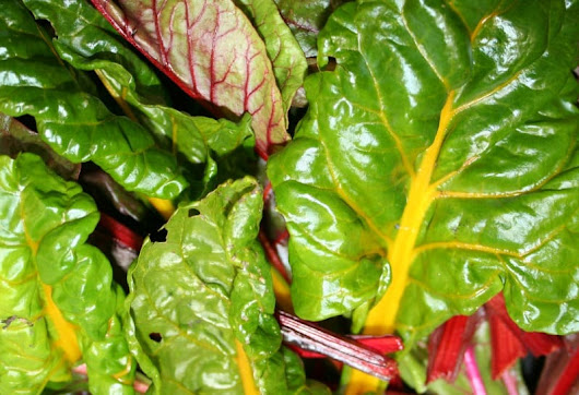 Growing Swiss Chard - Home Garden Joy