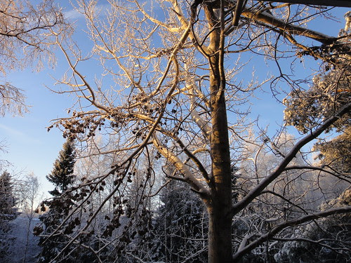 January, Sunshine in Winter time
