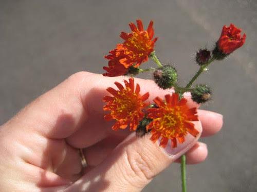 Fuzzy flowers