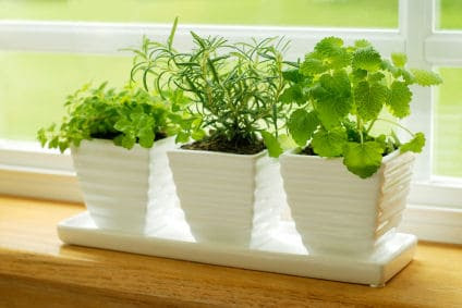 You'll Need A Sunny Window To Grow Herbs Indoors