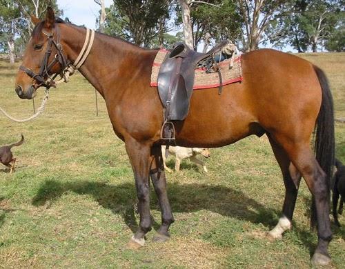 horse lovers dating australia Senior women over 60 - over 60 dating - australia , blonde , animal lover , horse lover , dog lover , australian 64 photos: 2 hi my name is kim.
