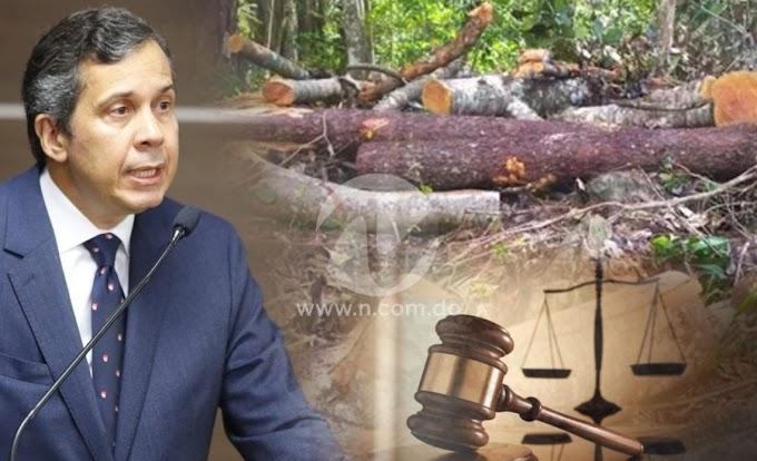 MEDIO AMBIENTE SOMETE A LA JUSTICIA A ACUSADO TALA ILEGAL DE ÁRBOLES EN LA VEGA