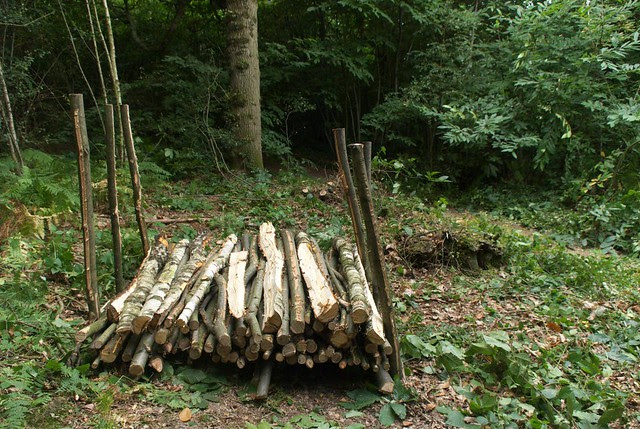 DSC_7002 logs stacked to season