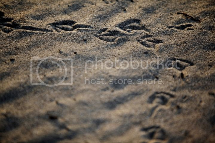 photo 07222014-WILDART-Beach-Yoga-044-blog_zps312be9a1.jpg