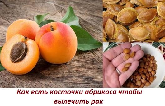 Применение абрикосовых семян в онкологии, дозы при лечении рака и его профилактики.