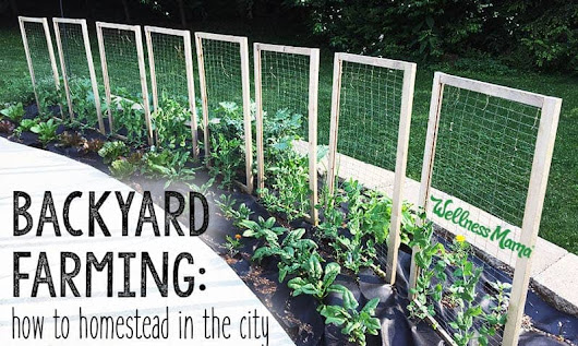 Backyard Farming: How to Homestead in the City | Wellness Mama
