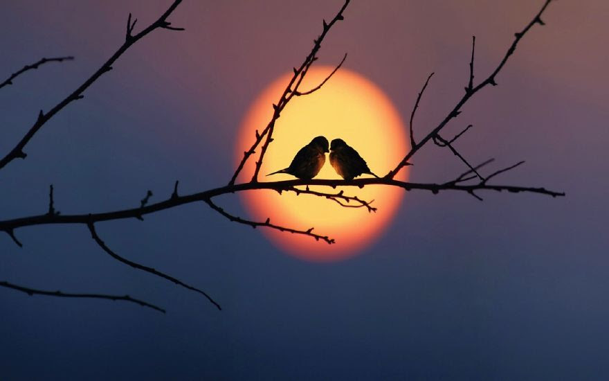 love-birds-sky-sunset-993-1440x900__880.jpg