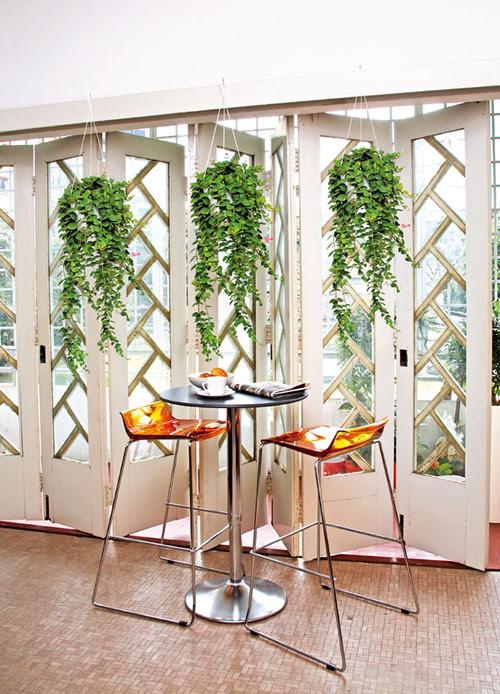 hanging plants tropical landscape
