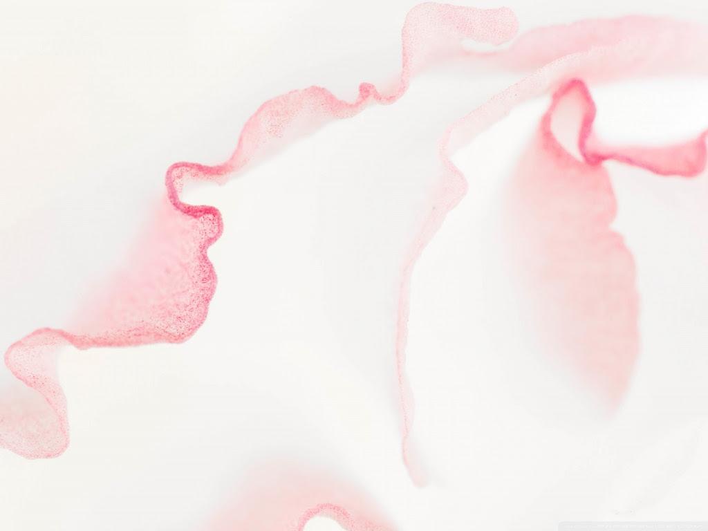 Lisianthus Light Pink Flower Macro ❤ 4K HD Desktop Wallpaper for
