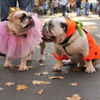 The Howl-O-Ween Blog: All About Pet Halloween Safety