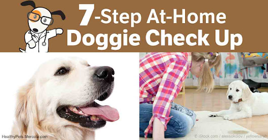 7 Simple Steps to Becoming Your Dog's Primary Health Defender