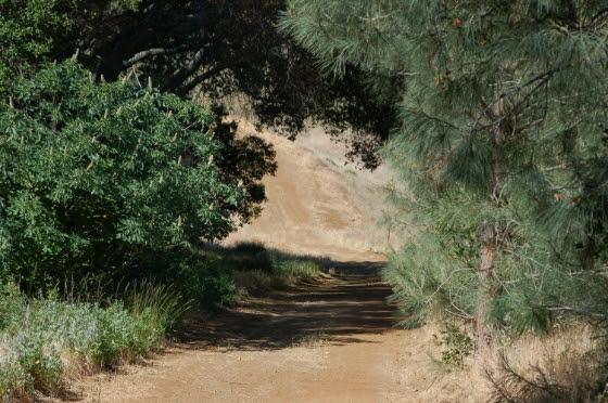 northern Cal trail-560.jpg