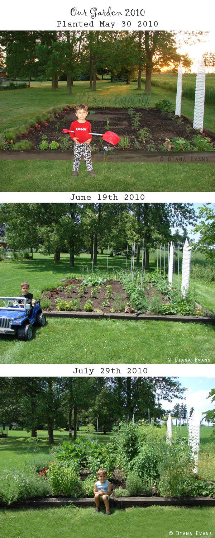 Garden 2010 - from start to harvest
