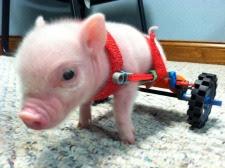 Chris-P-Bacon1