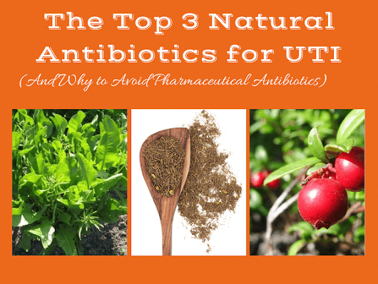 The 3 Most Potent Natural Antibiotics for UTI - Natural Alternative Therapies