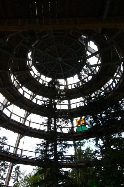 ungewöhnliche Baumperspektiven - Nationalpark Bayerischer Wald