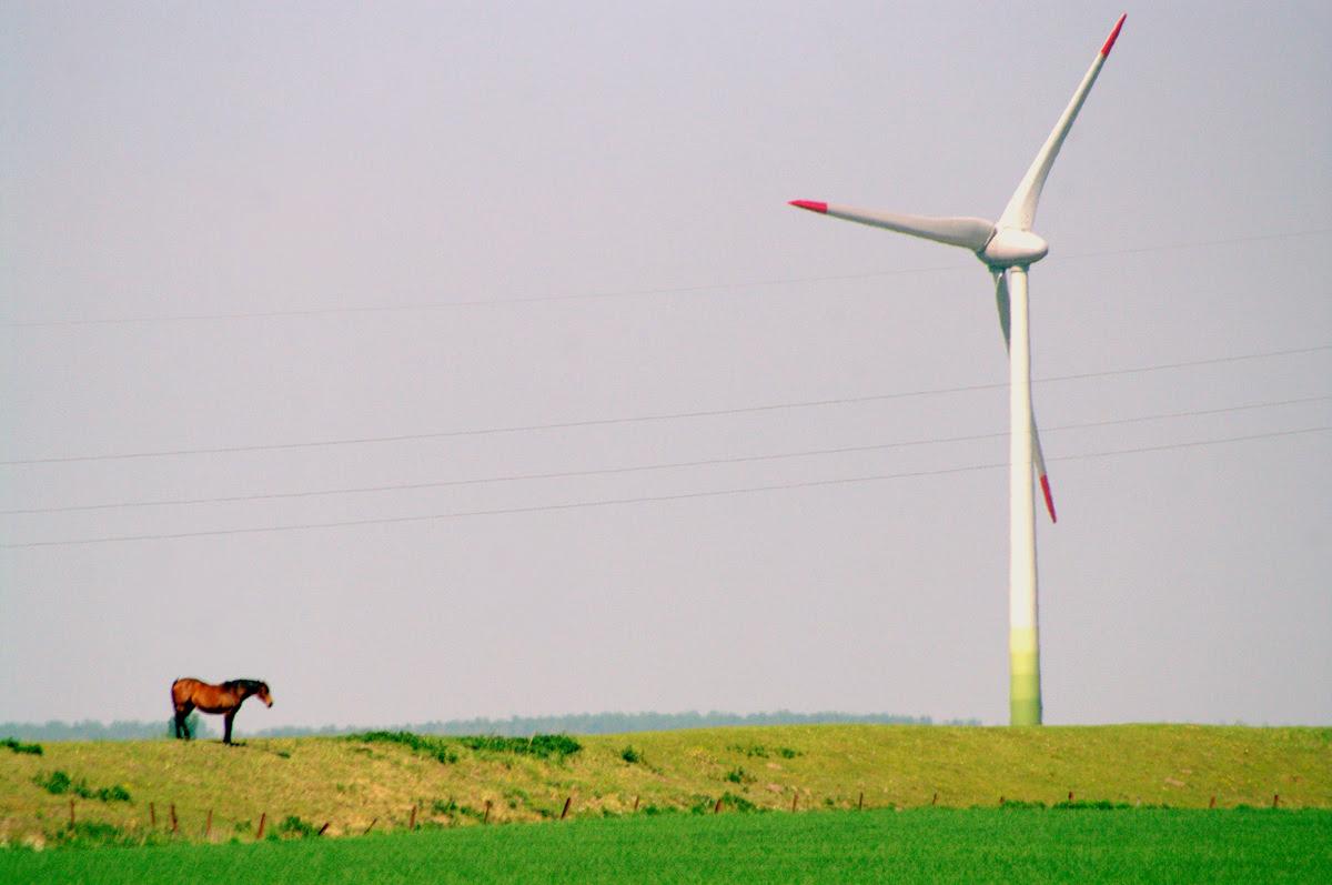 Schuelp pferd vor windrad