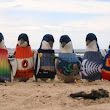 Knitted jumpers protect penguins from oil spills