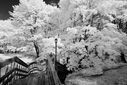 Infrared Photography: 2 Ways To Modify Your DSLR