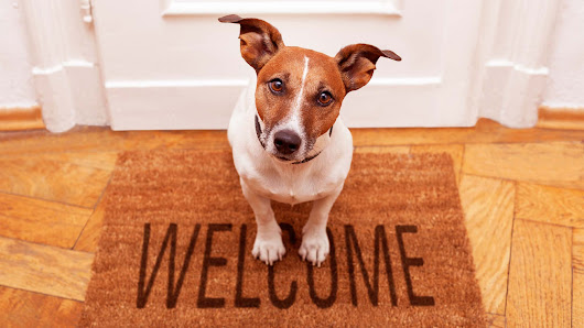 How a Pet-Friendly Look Can Help Sell Your Home