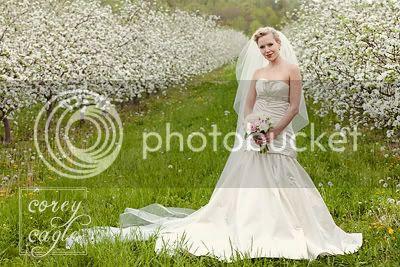 apple orchard bridal portrait