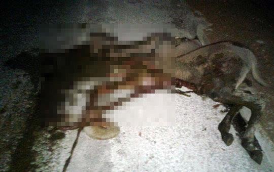 O impacto foi tão forte que o animal morreu na hora | Foto: Notícias de Santaluz