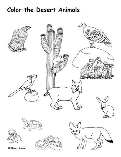 desert animals coloring page desert theme pinterest