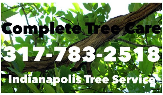 When You Need Affordable and Dependable Tree Removal, Complete Tree Care Has You Covered!