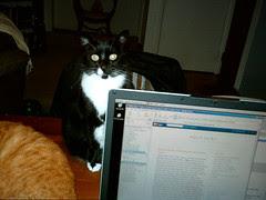 friday cat blogging #2