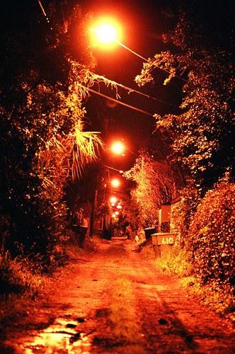 Savannah at Night