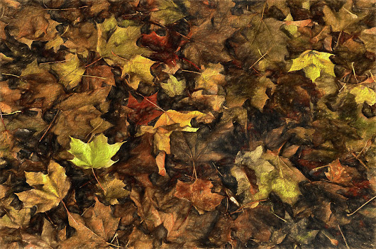 Decayed Autumn Leaves On The Ground Strong Stroke by Ricardo Dominguez