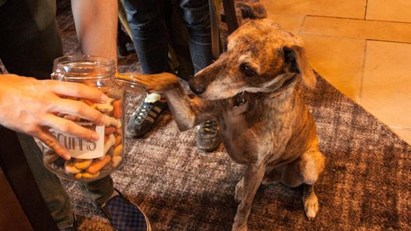 Dog-friendly Pubs in Leeds