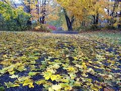 Leaves_102810b