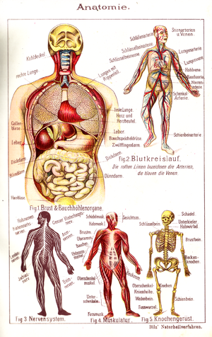 Bilz100 Tafel Anatomie
