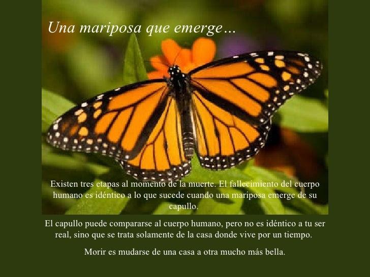 Noemi Y Su Fe Por Las Mariposas Lindo Mensaje Gracias Mi Linda Niña