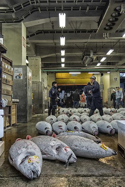 Tsukiji Tuna