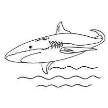 The Great White Shark El Gran Tiburon Blanco Dibujos Para