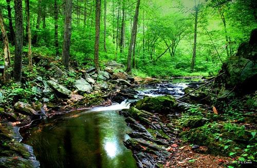 Woods Stream